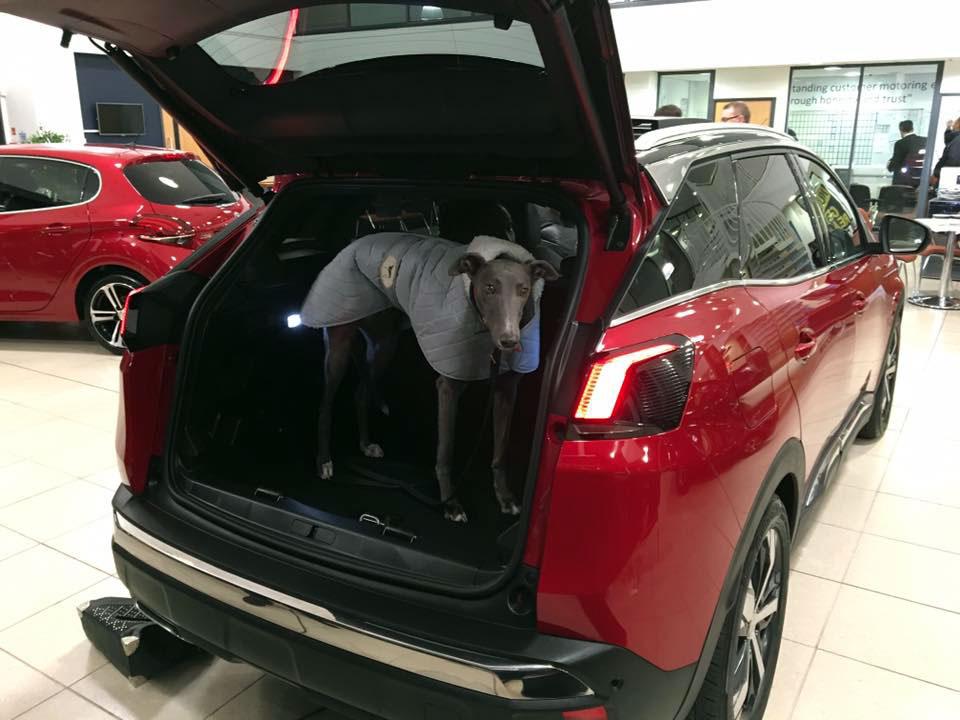Osbourne Purdie - Case Study - Peugeot Customer Previews 02
